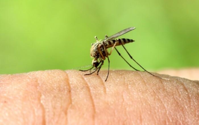 Αντιμετώπιση Κουνουπιών